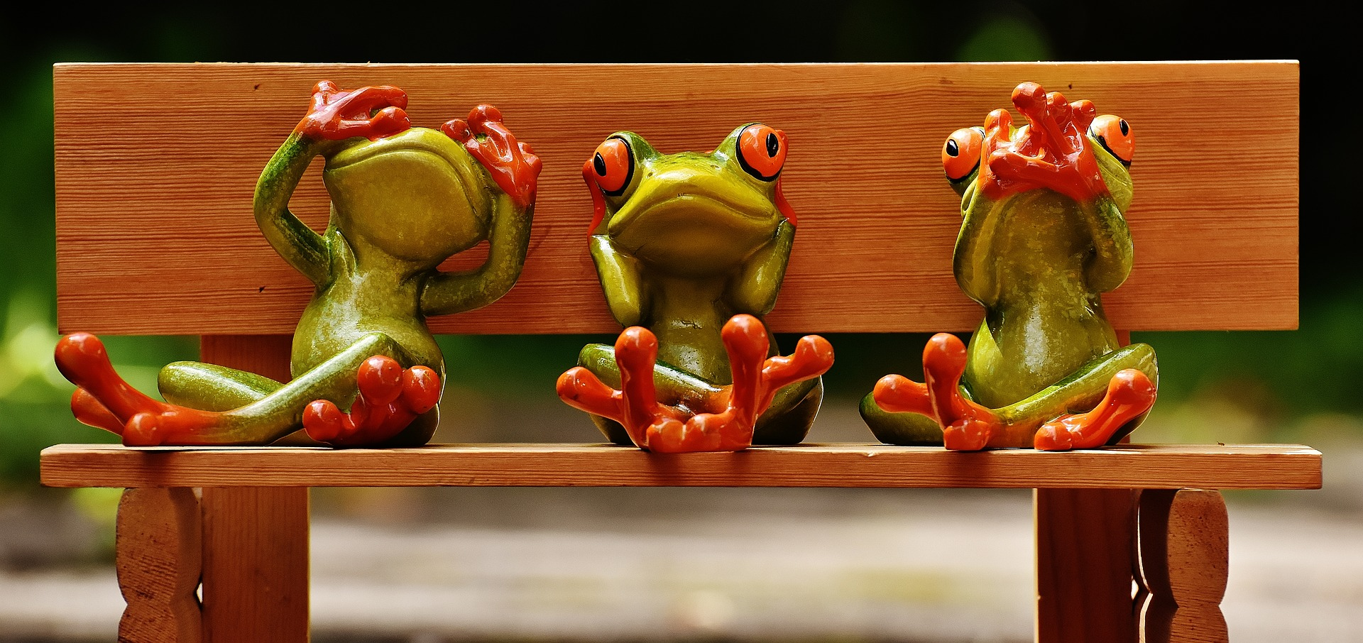 frogs-1610562_1920